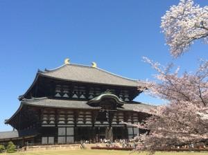 桜と東大寺。大仏さまは、すごい迫力だった。