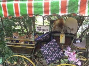 哲学の道の銀閣寺と反対側の終点あたりに、地域猫のたまり場がある。今年は、小さなワゴンの中に7匹も。めちゃ癒されたよ。