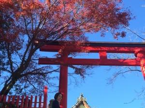 スッキリ晴れた秋晴れの空と、真っ赤な鳥居と紅葉がきれいです♪