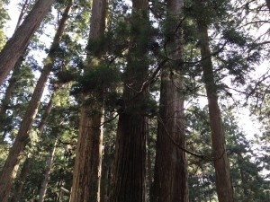 歩いているだけで自然のパワーをもらえるような高野山。
