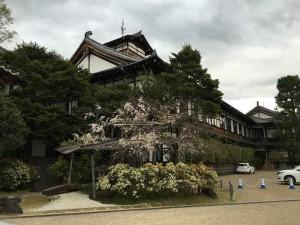 憧れの奈良ホテル。桜が、ちょっと寂しい……。