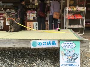 時間が余っちゃったので、土産物屋の猫店長を遊んでたよ。