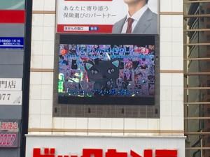 反射してうまく写真が撮れなかったけど、渋谷の街にBijuたんの声が反響してましたー!