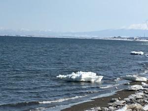 流氷は水平線の方まで流されてしまったけど、海岸線にその名残がプカプカ浮いてました。