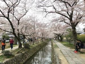 京都に来ると、必ず歩く哲学の道。