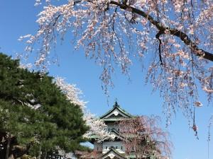 弘前城。母も一緒に、天守閣まで登りました。