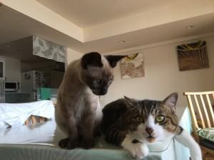 子猫がなにやら挑戦的な視線で、先住猫を見つめています。不穏な空気が……。