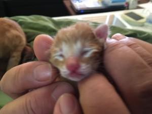 産まれたばかりの赤ちゃん猫。可愛すぎます。