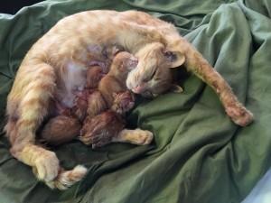 5匹の出産終了。大仕事を終えたお母さんは、ちょっと疲れた表情。