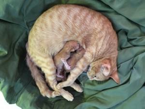 ついこの前まで、子猫だったにゃんこがお母さんになりました。5匹+1匹、みんな幸せになりますように。