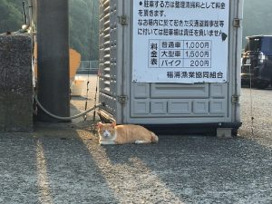 駐車場の係員ボックスの前に、オジサンに可愛がられてる猫ちゃんがのんびりと寝っころがってます/津波前