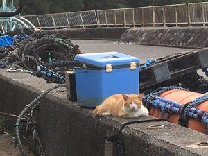 翌日。猫ちゃんは駐車場ボックスの近くで、ひなたぼっこしてた。